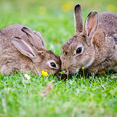 Photo of two rabbits sitting in the grass together.