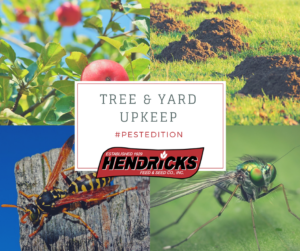 fruit tree spray, wasp and hornet killer, mole killer, and other pest control is available at Hendricks in Iowa