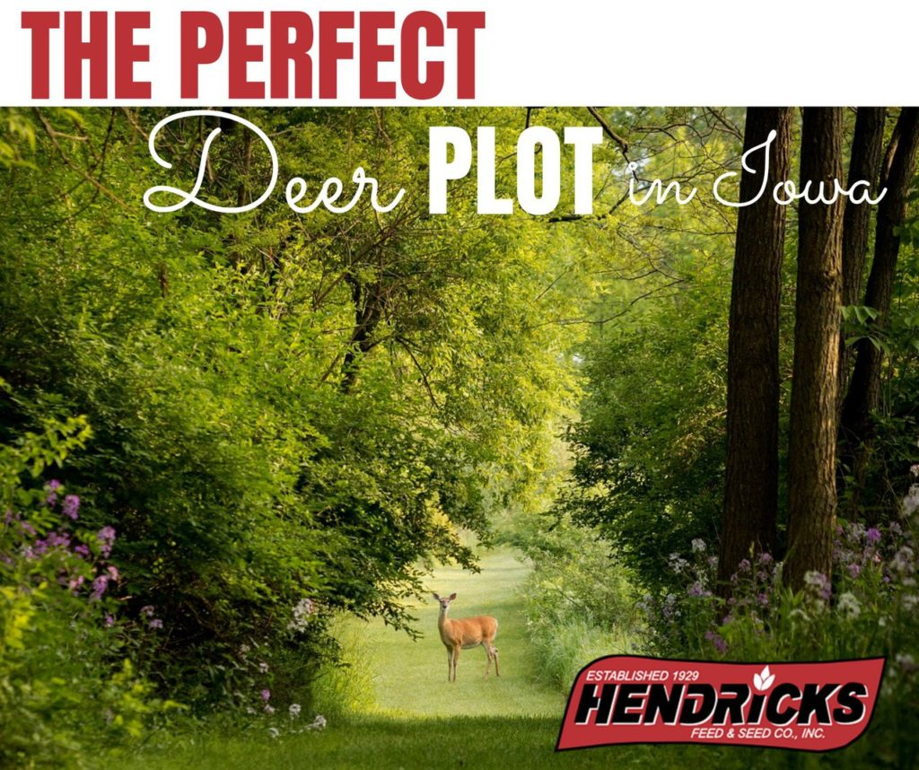 The Perfect Deer Plot in Iowa